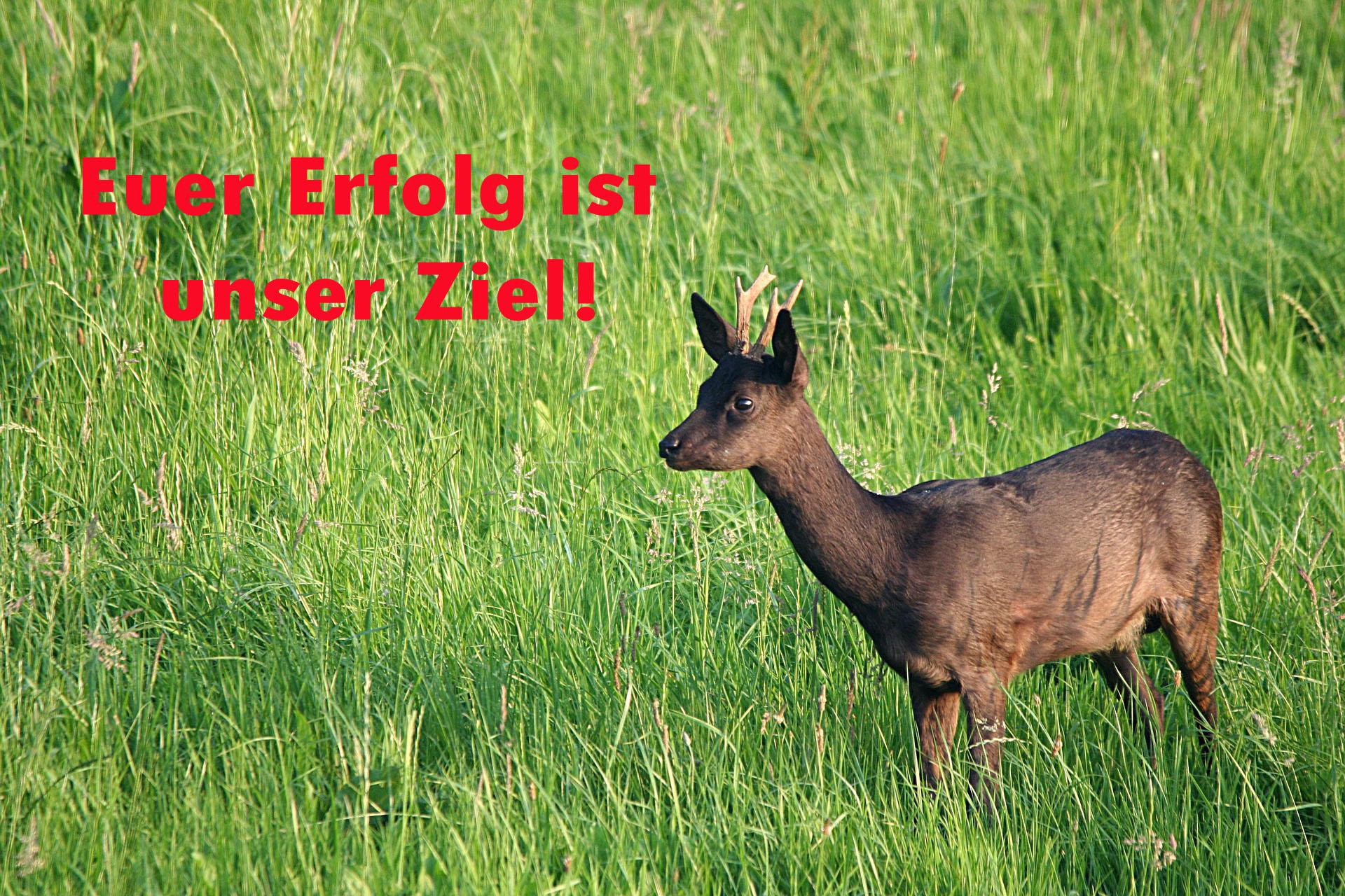 roe-deer-2199959_1920 Kopie